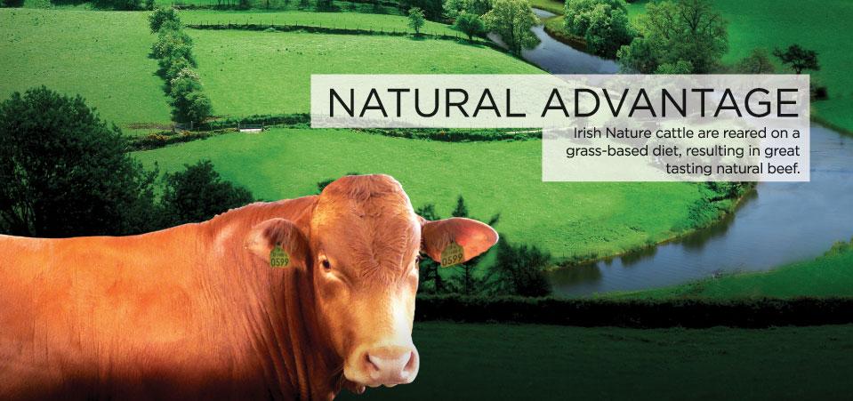 Irish Nature